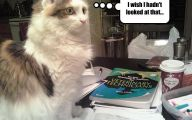 Funny Cat Books 21 Free Hd Wallpaper