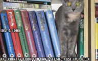 Funny Cat Books 23 Background Wallpaper