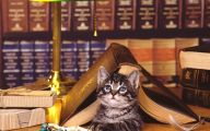Funny Cat Books 24 Desktop Background