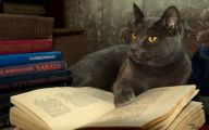 Funny Cat Books 31 Widescreen Wallpaper