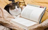 Funny Cat Books 35 Hd Wallpaper