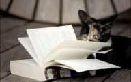 Funny Cat Books 38 Free Wallpaper