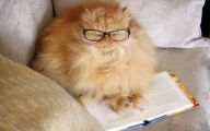 Funny Cat Books 6 Hd Wallpaper