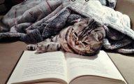 Funny Cat Books 8 Hd Wallpaper