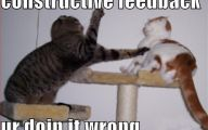 Funny Cat Fight 1 Free Hd Wallpaper