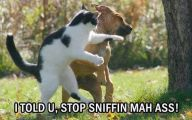 Funny Cat Fight 10 Free Wallpaper