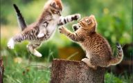 Funny Cat Fight 11 Desktop Background