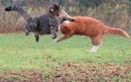 Funny Cat Fight 15 Cool Hd Wallpaper