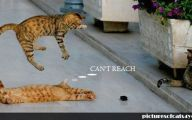 Funny Cat Fight 18 Cool Hd Wallpaper