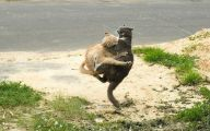 Funny Cat Fight 19 Wide Wallpaper