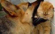 Funny Cat Fight 20 Desktop Background