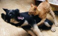 Funny Cat Fight 21 Wide Wallpaper