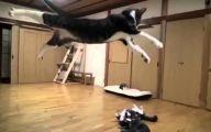 Funny Cat Fight 24 Hd Wallpaper