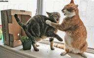 Funny Cat Fight 25 Hd Wallpaper
