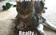 Funny Cat Fight 27 Desktop Background