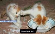 Funny Cat Fight 3 Cool Wallpaper
