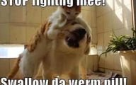 Funny Cat Fight 35 Free Wallpaper