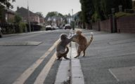 Funny Cat Fight 38 Hd Wallpaper