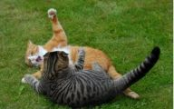 Funny Cat Fight 40 Cool Hd Wallpaper