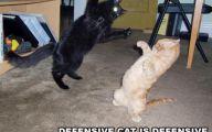 Funny Cat Fight 5 Free Hd Wallpaper