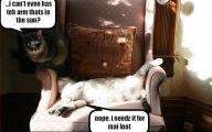 Funny Cat Fight 7 Free Wallpaper