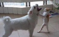 Funny Cat Fight 8 Wide Wallpaper