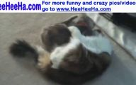 Funny Cat Fight 9 Background