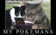 Funny Cat Games 10 Wide Wallpaper