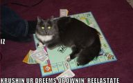 Funny Cat Games 13 High Resolution Wallpaper