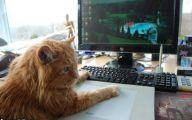 Funny Cat Games 17 Desktop Wallpaper