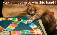 Funny Cat Games 21 Desktop Wallpaper