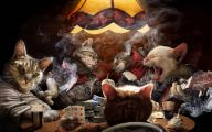Funny Cat Games 24 Wide Wallpaper