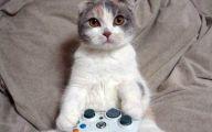 Funny Cat Games 27 Cool Hd Wallpaper
