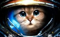 Funny Cat Games 36 High Resolution Wallpaper