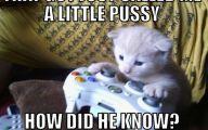 Funny Cat Games 4 Hd Wallpaper