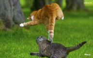 Funny Cat Jumping  10 Desktop Background