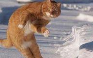 Funny Cat Jumping  12 Free Wallpaper