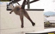 Funny Cat Jumping  13 Free Hd Wallpaper