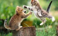 Funny Cat Jumping  19 Hd Wallpaper