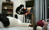 Funny Cat Jumping  2 High Resolution Wallpaper