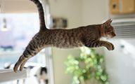 Funny Cat Jumping  20 Desktop Background