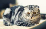Funny Cat Jumping  24 Desktop Wallpaper