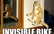Funny Cat Jumping  28 Background Wallpaper