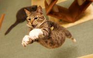 Funny Cat Jumping  29 High Resolution Wallpaper