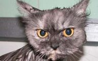Funny Cat Jumping  31 Desktop Background