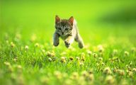 Funny Cat Jumping  6 Widescreen Wallpaper