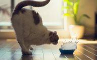 Funny Cat Jumping  7 Free Hd Wallpaper