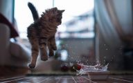 Funny Cat Jumping  8 Cool Wallpaper