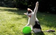 Funny Cat Playing 24 Widescreen Wallpaper
