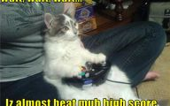 Funny Cat Playing 26 Free Hd Wallpaper